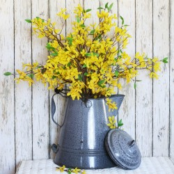 Forsythia (Forsythia x Intermedia 'Lynwood Gold')