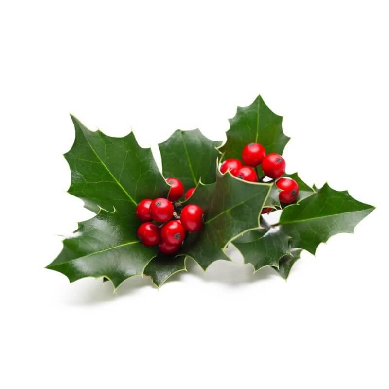houx commun ilex aquifolium vente arbre et arbuste p pini res naudet. Black Bedroom Furniture Sets. Home Design Ideas