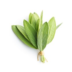 Sauge officinale (Salvia Officinalis)