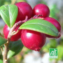 Canneberge/Cranberry 'Oxycoccos' BIO