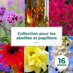 Collection de 16 vivaces pour les abeilles et papillons